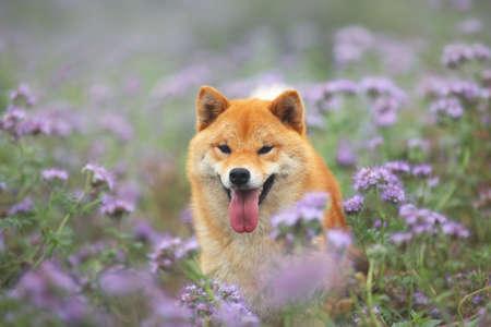 Dogecoin dans un champ